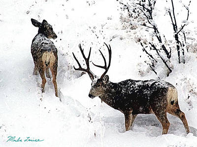 Deer And Snow 1 Art Print by Marla Louise