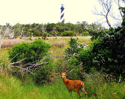 Photograph - Deer At Cape Hatteras Lighthouse 2 51917 by Mark Lemmon