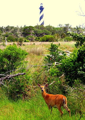 Photograph - Deer At Cape Hatteras Lighthouse 3 51917 by Mark Lemmon
