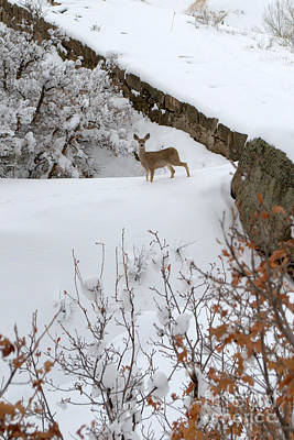 Photograph - Deer At Castlewood Canyon by Anjanette Douglas