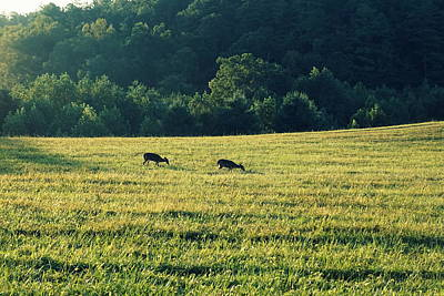 Photograph - Deer At Dusk by Laurie Perry
