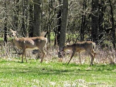 Photograph - Deer At Lakewood  by Kathie Chicoine