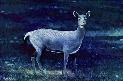 Photograph - Deer At Night by Michelle McPhillips
