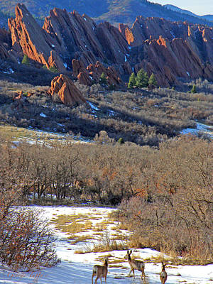 Deer At Roxborough Art Print