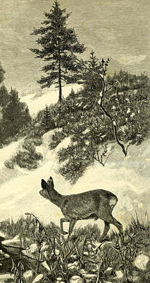Wintry Drawing - Deer by Austrian School