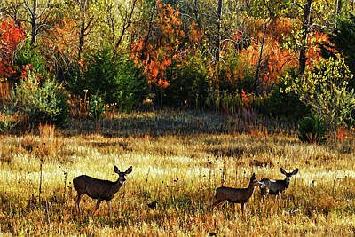 Deer Autumn Art Print
