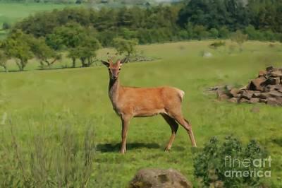 Deer Calf. Art Print