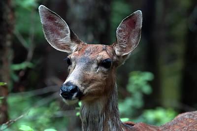 Photograph - Deer  by Chris LeBoutillier