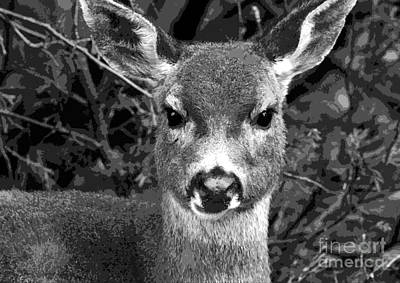 Photograph - Deer Close-up Bw Stylized  by Sharon Talson