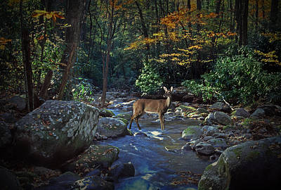 Anne Geddes - Deer crossing a Stream at Roaring Forks by Randall Nyhof