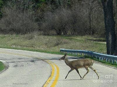 Photograph - Deer Crossing by Kathie Chicoine