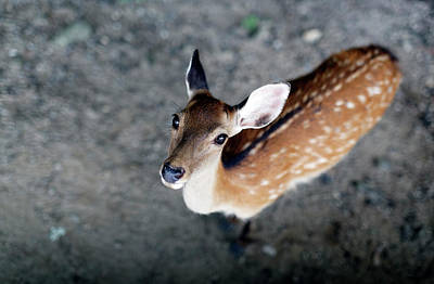 Photograph - Deer by David Harding