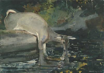Deer Lake Painting - Deer Drinking by Winslow Homer