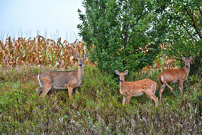 Photograph - Deer Family by Bonfire Photography
