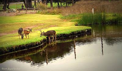 Photograph - Deer Family Feeding by Joyce Dickens