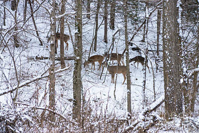 Photograph - Deer Family In Snow by Jennifer White