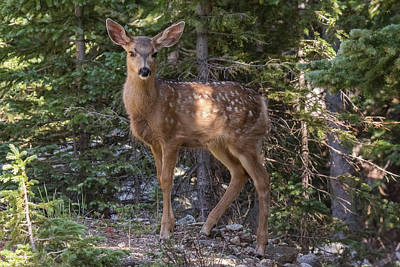 Art History Meets Fashion Rights Managed Images - Deer Fawn Stays Alert Royalty-Free Image by Tony Hake