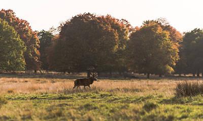 Photograph - Deer Field by Matt Malloy