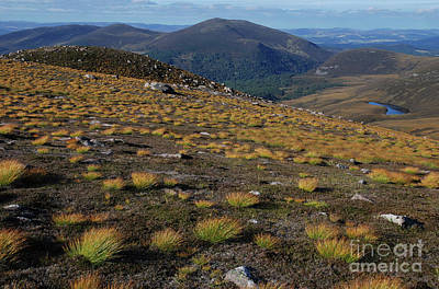 Photograph - Deer Grass - Cairngorms by Phil Banks
