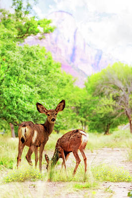 Mule Deer Fawn Photograph - Deer Grazing On Wildflowers In Zion Canyon by Susan Schmitz