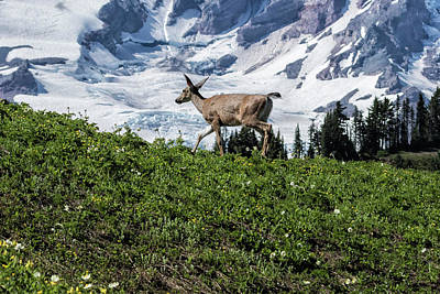 Photograph - Deer Heading Up The Mountain, No. 1 by Belinda Greb