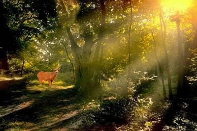 Photograph - Deer Heart by Diana Angstadt