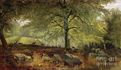 Stream Painting - Deer In A Wood by Joseph Adam
