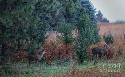 Photograph - Deer In Autumn by Elizabeth Winter