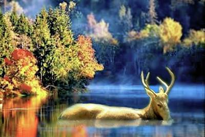 Digital Art - Deer In Autumn by Janette Boyd