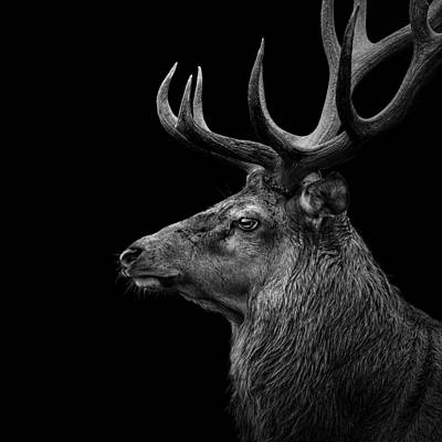 Deer In Black And White Print by Lukas Holas