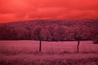 Photograph - Deer In Ir by Emily Stauring