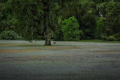 Deer In Meadow Art Print
