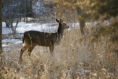 Photograph - Deer In Morning Light by Toni Berry