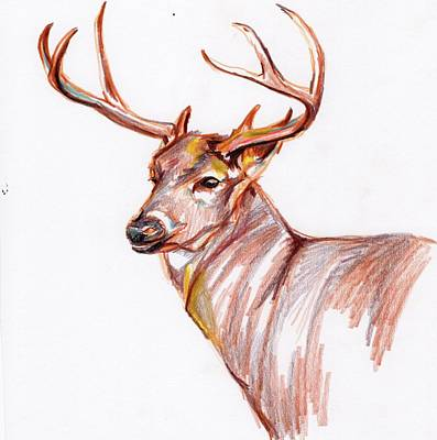 Abstract Realism Drawing - Deer In Pencil by Anne Seay