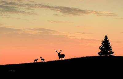 Digital Art - Deer In Silhouette by John Wills
