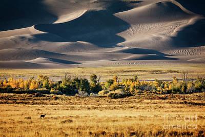 Photograph - Deer In The Dunes by Scott Kemper