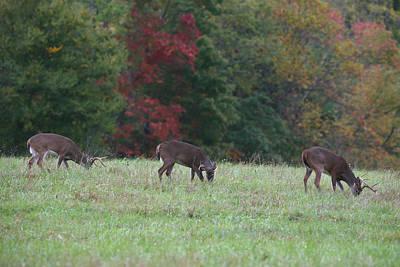Deer In The Fall Art Print by James Jones