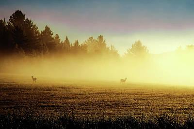 Deer In The Fog Art Print by Tony Beaver