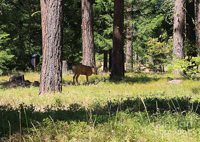 Photograph - Deer In The Forest by Carol Groenen