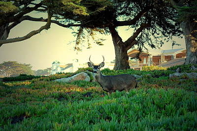 Photograph - Deer In The Iceplant by Joyce Dickens