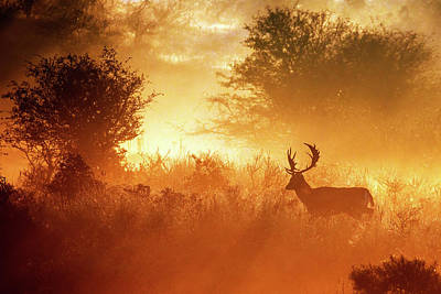 Deer In The Mist Art Print