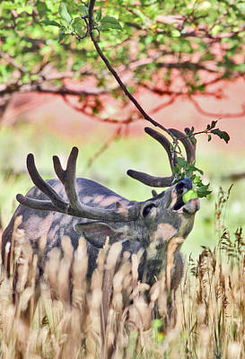 Deer In The Orchard Art Print