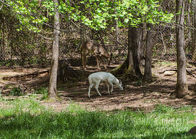 Photograph - Deer In The Shade by Donna Brown