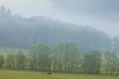 Scenic Photograph - Deer In The Smokies by Andrew Soundarajan
