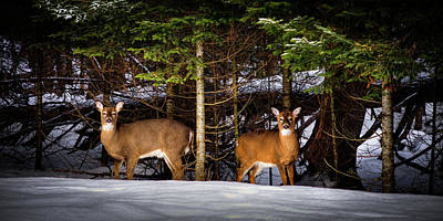 Landscapes Photograph - Deer In The Snow by David Patterson