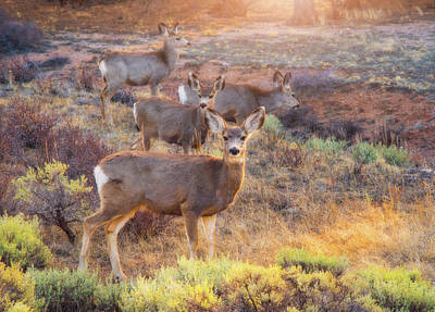 Print featuring the photograph Deer In The Sunlight by Darren White