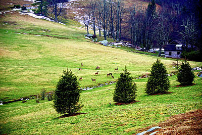 Photograph - Deer In Winter Valley by Meta Gatschenberger