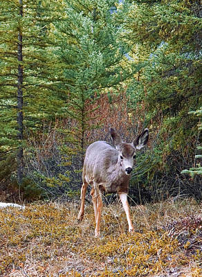Photograph - Deer In The Wild 1 by Elisabeth Dubois