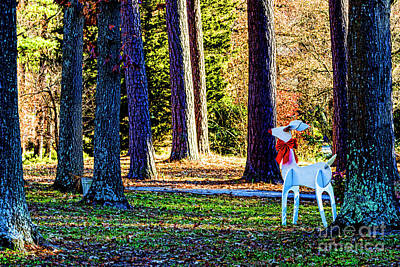 Photograph - Deer In The Woods 0168t by Doug Berry