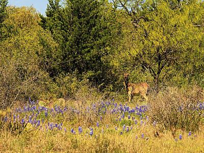 Photograph - Deer In Wildflowers by Charles McKelroy